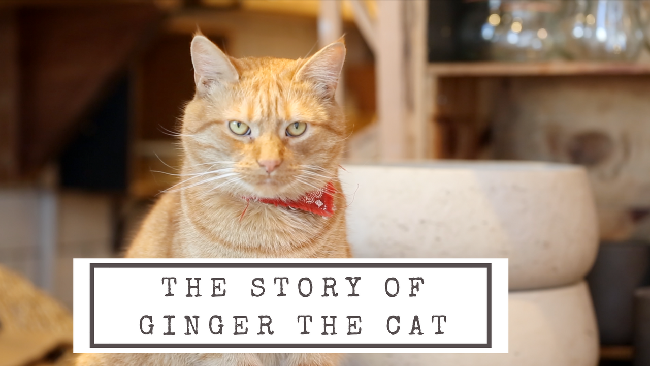 The story of Ginger the cat (1)
